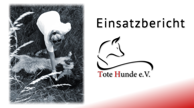 #totehunde – Bericht Nr. 35 Aus Berlin