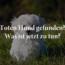 Toten Hund Gefunden – Was Nun?