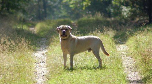 Gastbeitrag: Sucht Den Hund Nicht, Sondern Findet Menschen Die Ihn Gesehen Haben!