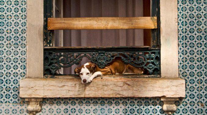 Hund In Offenem Fenster